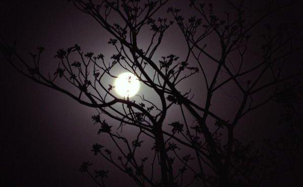 Microrrelato, Oliverio Girondo, Nocturno