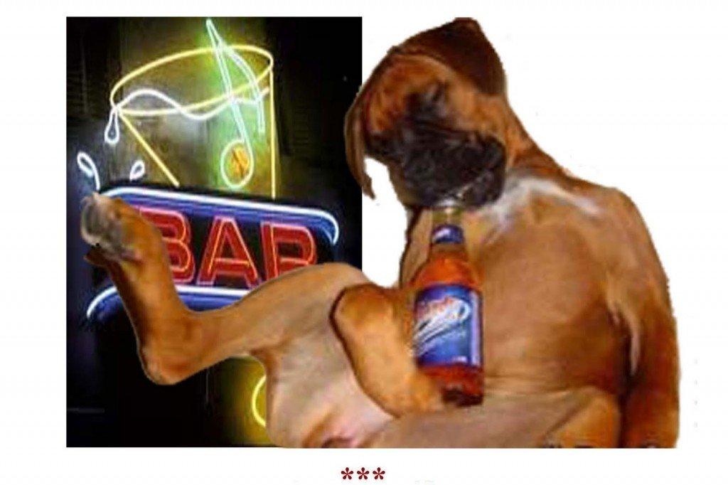 cerveza-perros-bares