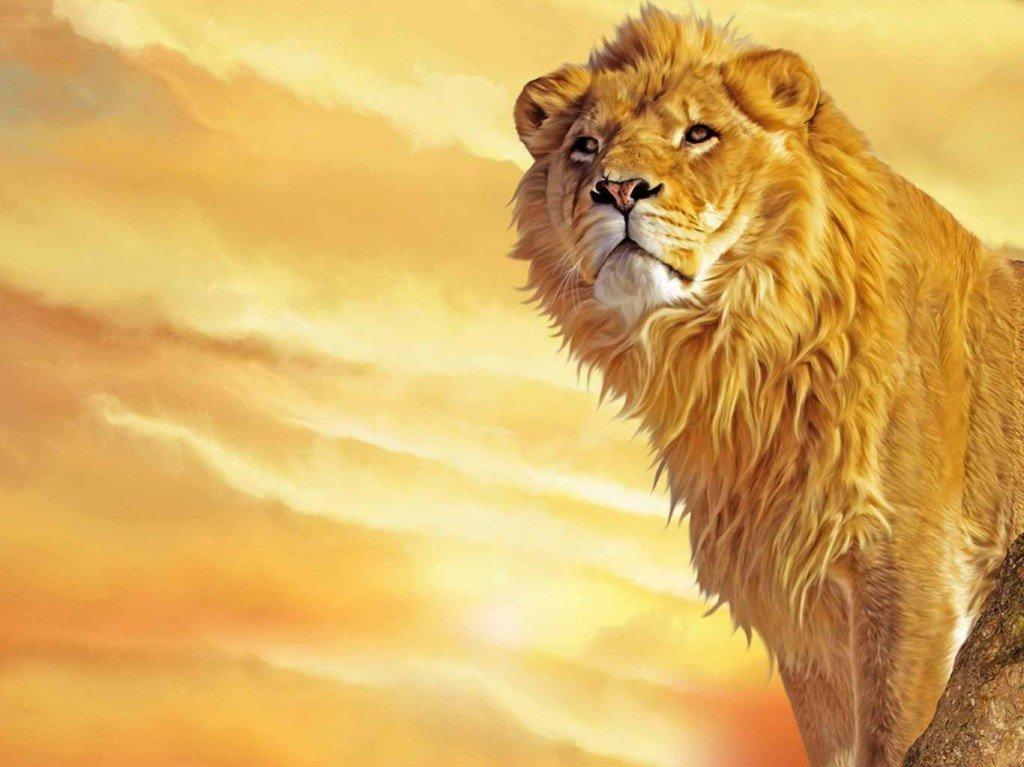 León. Fuente de la imagen