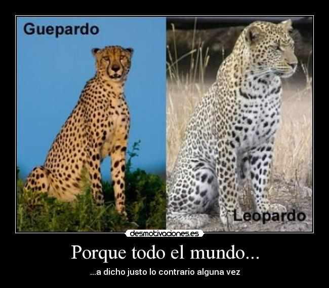 guepardo, leopardo, corrector de estilo, concursos literarios