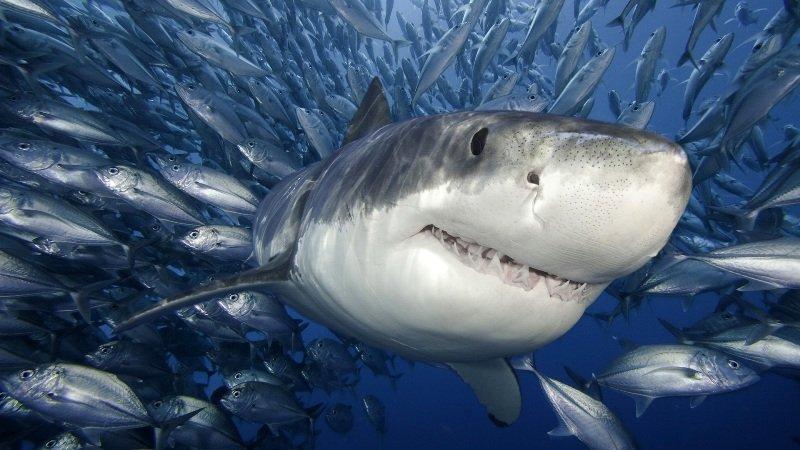 Cuento, Bertolt Brecht, Si los tiburones fueran hombres