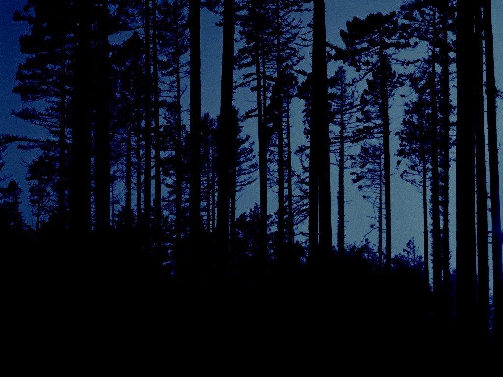 Poema, Margarita Schultz, El ojo de la noche