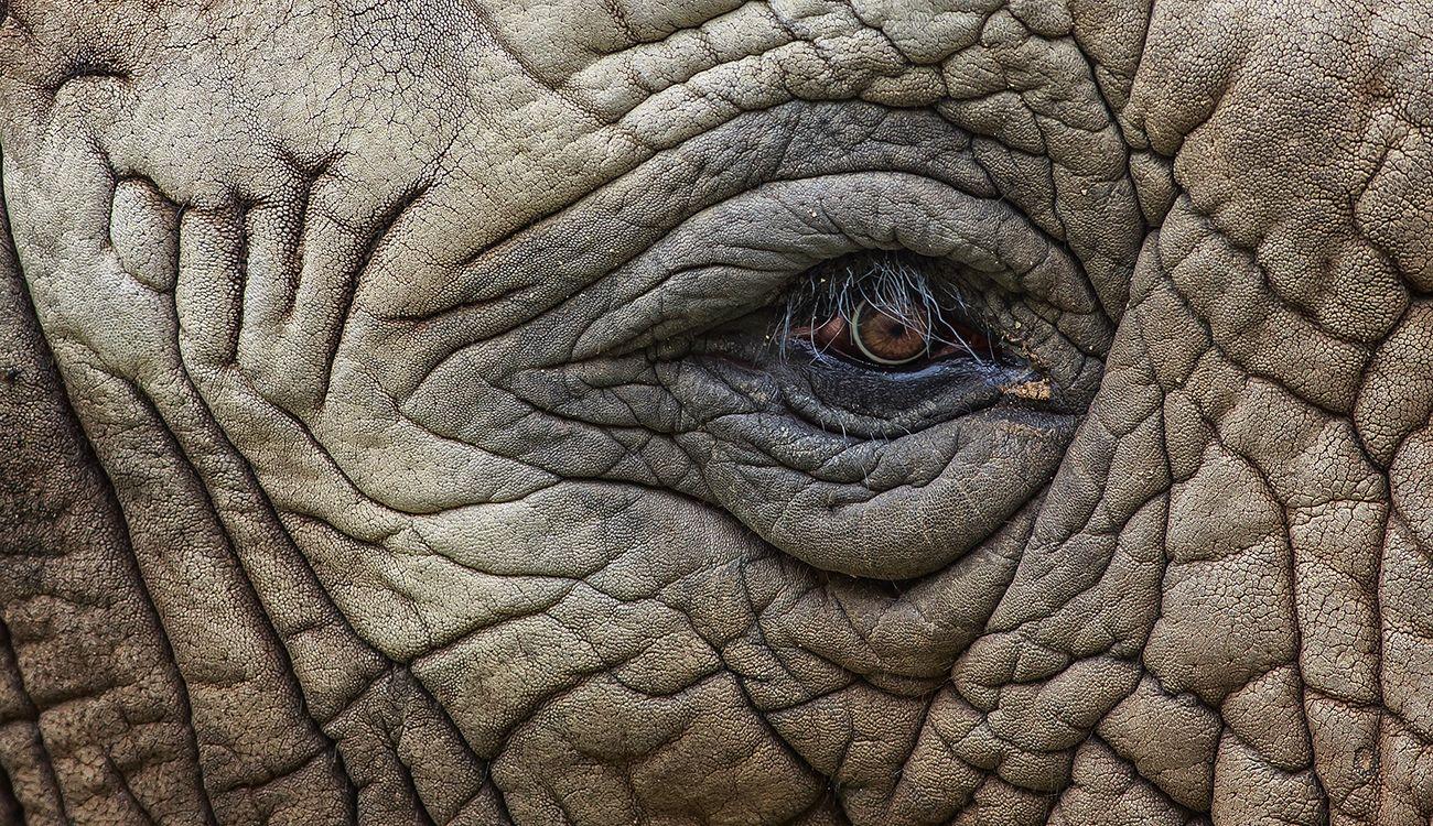 Asociación de imágenes  - Página 16 Elefante