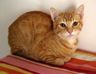 Cuento, Margarita Schultz, El gato de Malka