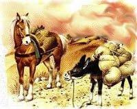 Un cuento corto para niños, El caballo y el asno
