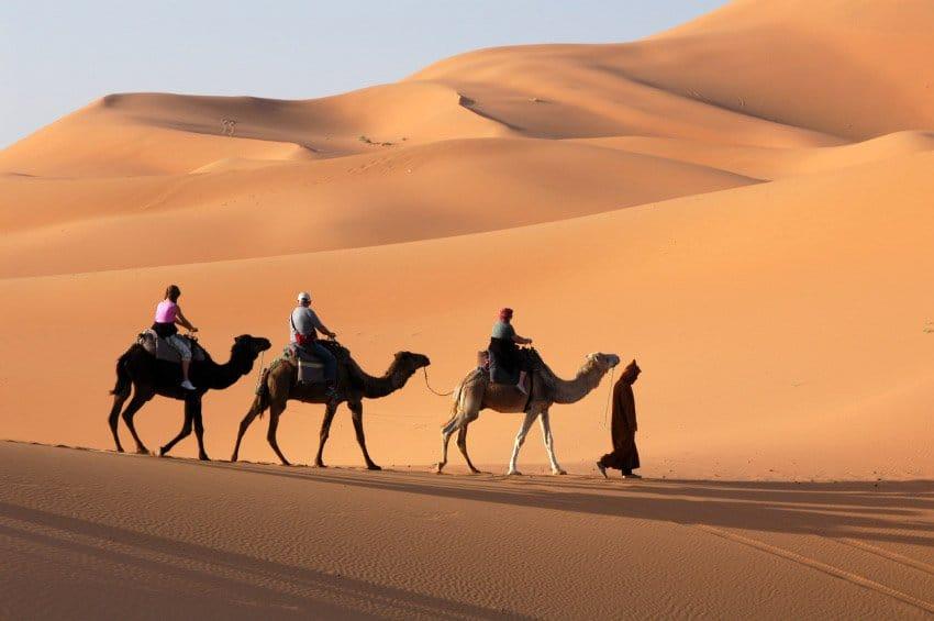 El camello atado