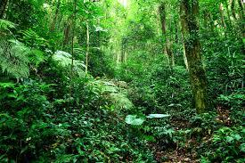 Cuento infantil selva amazeónica