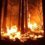 poema incendio bosque