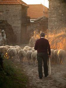 ell pastor y el lobo