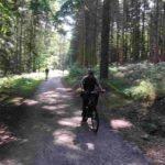 <b>El bosque maldito, una historia corta de Pedro Benengeli</b>