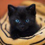 el gato de París, Osvaldo Soriano